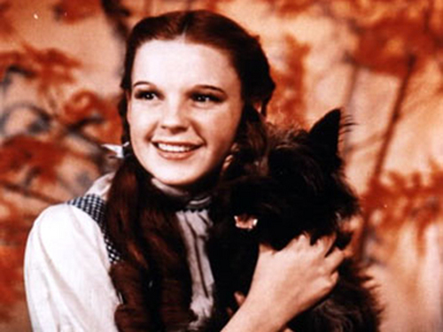 Dorothy And Toto Wallpaper
