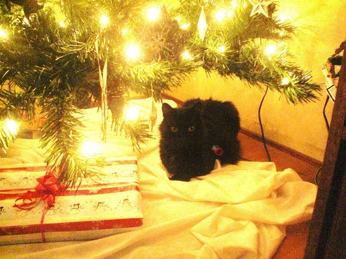 Look What's Under The Tree!