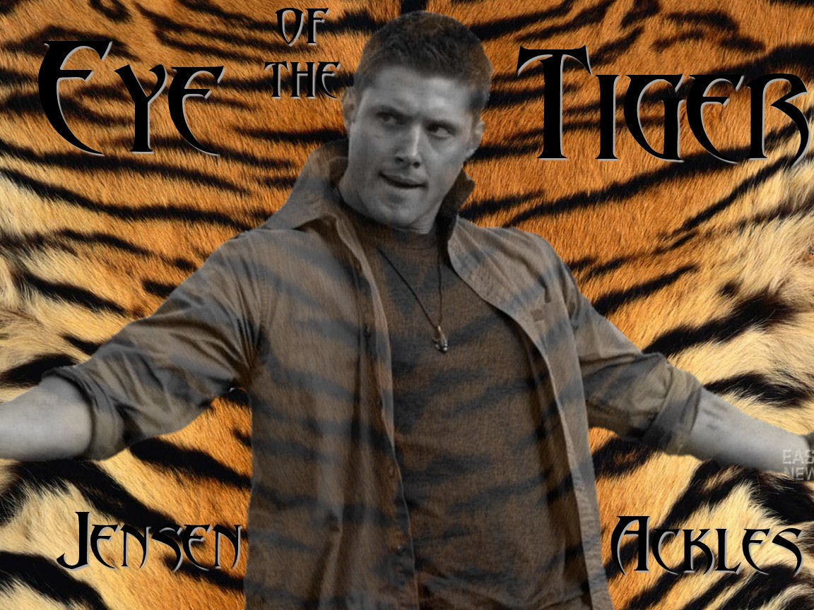 Eye Of The Tiger Wallpaper Jensen Ackles Wallpaper 2678125