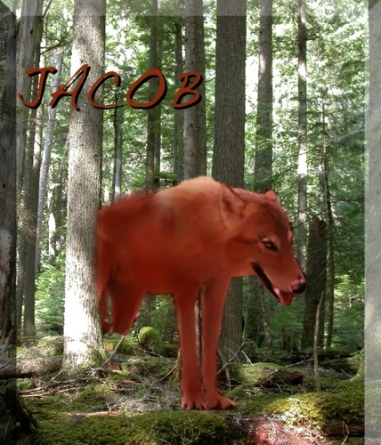 Jacob (WOLF FORM)