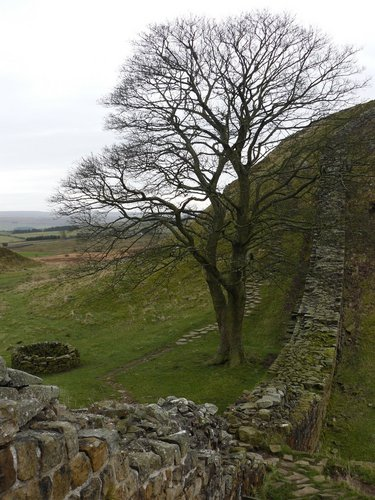 Northern England - Hadrian's Wall, Sycamore Gap