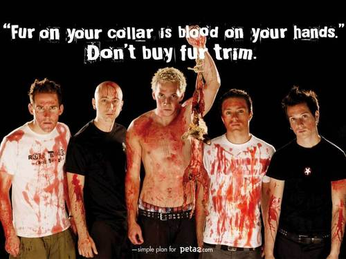 simple plan supports peta