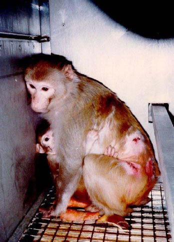 Animal Testing....is WRONG